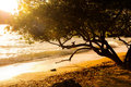 Sunset on the beac and tree tropical beach with sunrise Stock Image