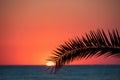 Sunset beach, evening sea, palm trees Royalty Free Stock Photo