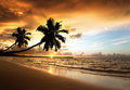 Sunset on the beach of sea caribbean Stock Photos