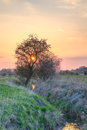 Sunset behind a tree by a brook the sun is setting causing the sky to be filled with vivid colors Royalty Free Stock Images