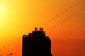 Sunset at Beijing Olympic Park with kites Royalty Free Stock Photo