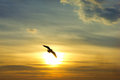 Sunset bird silhouette and sun a with a sky background Royalty Free Stock Images