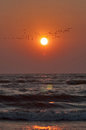 Sunset, birds and sea waves Royalty Free Stock Photo