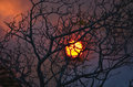 Sunset through blackened tree during bushfire sun glowing and setting smoke and clouds behind a burnt a Stock Images