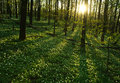 Sunset in the blossoming green forest in sunlight and shadows Royalty Free Stock Photo