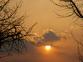 The sunset and branches shadows Royalty Free Stock Photo