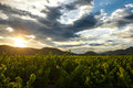 Sunset through clouds over a Napa Valley vineyard Royalty Free Stock Photo
