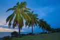 Sunset coconut trees china hainan Royalty Free Stock Photo