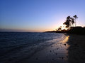 Sunset through Coconut Trees line Kahala Beach Royalty Free Stock Photo