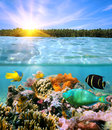 Sunset and colorful underwater marine life with coconut trees on horizon split by waterline Stock Photos