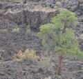 Sunset Crater Volcano Lava Pool, formed from the Bonito`s Lava Flow. Ponderosa Pine Trees growing on the lava rock. In Northern Ar Royalty Free Stock Photo