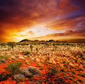 Sunset Desert Beauty Royalty Free Stock Photo