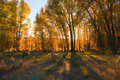 Sunset in fall forest Royalty Free Stock Photo