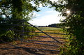 Sunset on a farm behind gate showing field of corn Royalty Free Stock Images