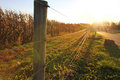 Sunset on farm, corn field behind the fence Royalty Free Stock Photo