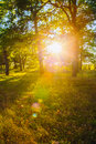 Sunset In Forest Trees. Natural Sunlight Sunshine In Woods. Sunn Royalty Free Stock Photo