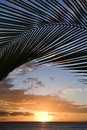 Sunset framed by palm, Maui. Stock Photography
