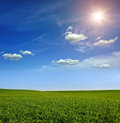 Sunset on the Green Field of wheat, blue sky and sun, white clouds. wonderland Royalty Free Stock Photo