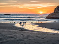 Sunset with gulls on beach colorful over the pacific ocean at bandon oregon feeding in small stream flowing over sand into ocean Royalty Free Stock Image
