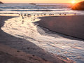 Sunset with gulls on beach colorful over the pacific ocean at bandon oregon feeding in small stream flowing over sand into ocean Royalty Free Stock Photos