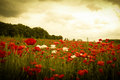 Sunset in horizon covering field of wild flowers white and red Stock Photo