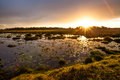 Sunset in the isimangaliso wetland park great escape lake with water lilies kwazulu natal south africa Stock Image