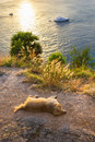 Sunset on the island of Phuket. Dog sleeps on the beach Royalty Free Stock Image