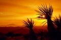 Sunset, Joshua Tree National Park, USA Royalty Free Stock Photo
