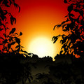 Sunset in Jungle Stock Photography