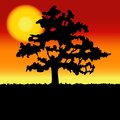 Sunset landscape with tree silhouette vector Royalty Free Stock Photography