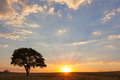 Sunset and lone tree at ezemvelo south africa Royalty Free Stock Photos
