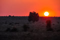 Sunset at Lotus Creek in the outback, Australia Royalty Free Stock Photo