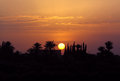 Sunset morocco marrakesh over the palm grove Royalty Free Stock Images