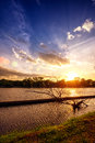 Sunset at national lake park with silhouette dry tree on foreground Royalty Free Stock Photo