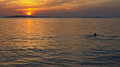 Sunset over the adriatic sea with lone swimmer Royalty Free Stock Photo