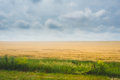 Sunset over agricultural green field. Dramatic sky Royalty Free Stock Photo
