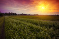 Sunset over the countryside Royalty Free Stock Photo