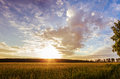 Sunset over the field Royalty Free Stock Photo