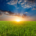 Sunset over field in steppe Royalty Free Stock Images
