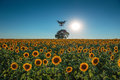 Sunset over the field of sunflowers and flying drone Royalty Free Stock Photo