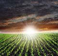 Sunset over fields Royalty Free Stock Images