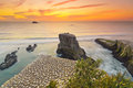 Sunset over Gannet Colony, Muriwai Beach, Auckland, New Zealand Royalty Free Stock Photo