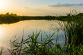 Sunset over lake and vegetation Stock Photography