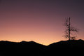 Sunset over mountains rocky with a leafless tree in the foreground Stock Images