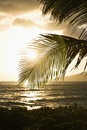 Sunset over ocean with palm. Royalty Free Stock Photo