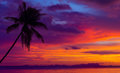 Sunset over the ocean with tropical palm tree