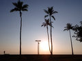 Sunset over the Pacific Ocean with light through the Coconut tre Royalty Free Stock Photo
