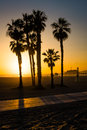 Sunset over palm trees in Santa Monica Royalty Free Stock Photo