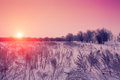 Sunset over snowy field Royalty Free Stock Photo