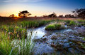 Sunset over swamps in summer focheloerveen drenthe netherlands Stock Photos